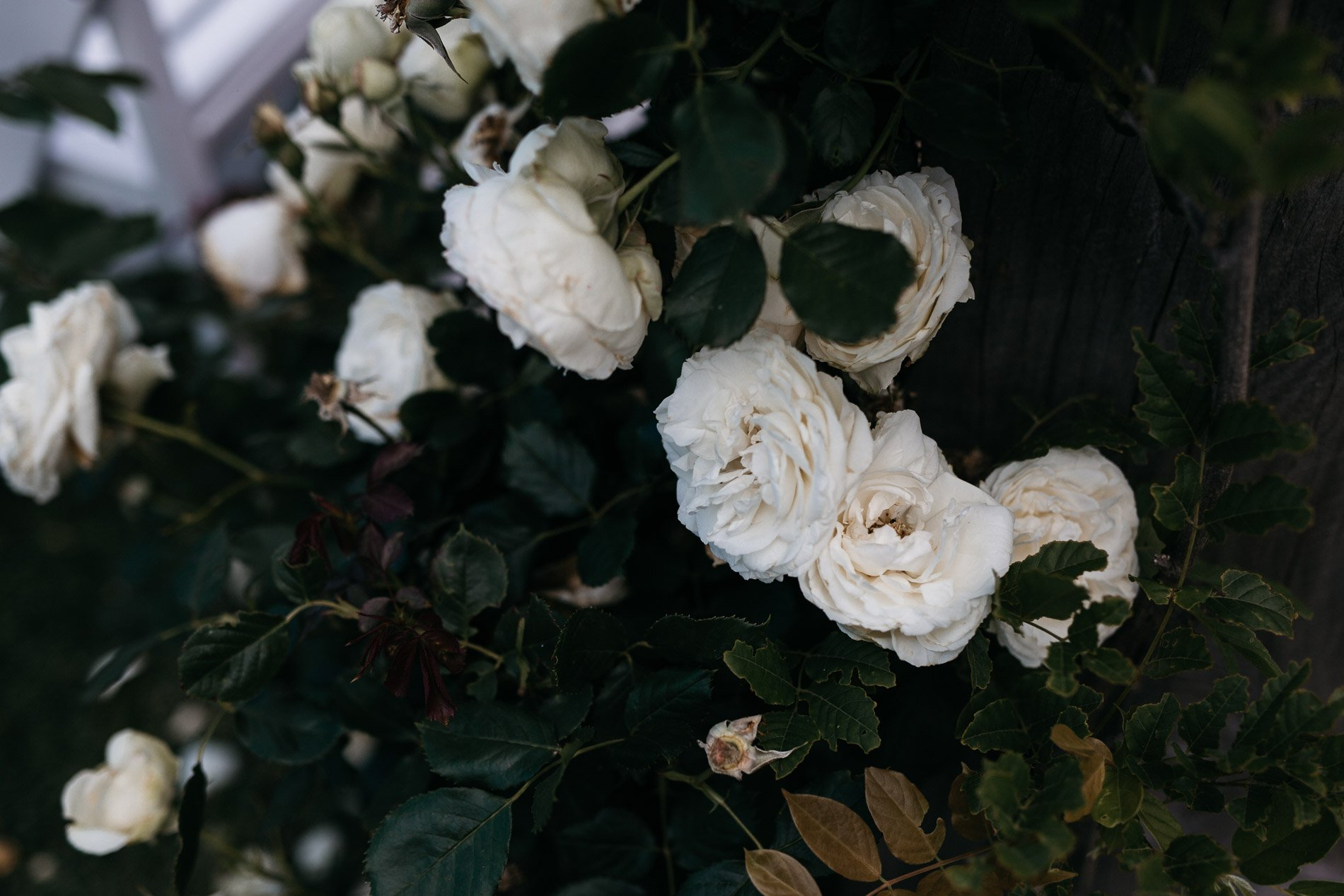 Fern and stone wedding photography flowers